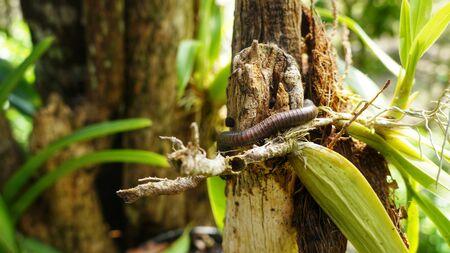 creep: caterpillar creeping on plant in natural surrounding