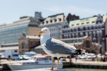 helsinki: Big Seagull standing on Helsinki Market Square. Stock Photo