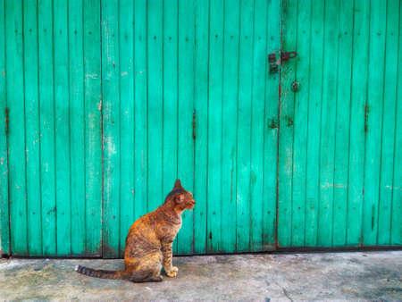 wicket: Cat sitting in front of the door. Stock Photo