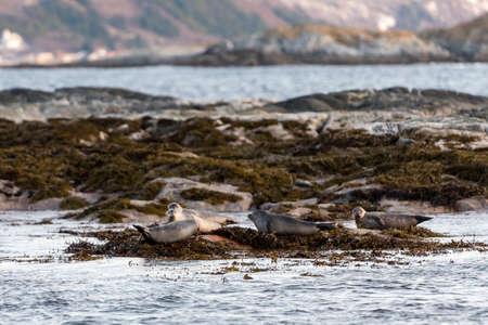 sea lion: Sea Lion