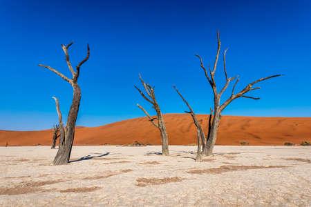 Narnib desert