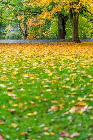 autumn leaves in the park Stock Photo