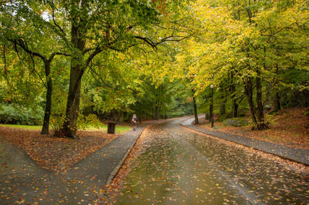 Autumn walk in a park. Tree's leaves are green and yellow and the ground is filled with brown leaves.