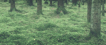 Trees in moss all in a green tint. 2015-03-11 免版税图像