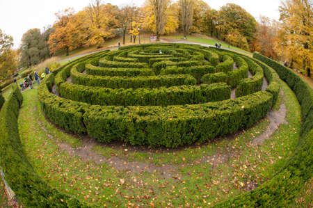 Wide angle view of a hedge maze in a park.