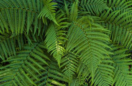 Beautiful green fern leaves in a forest. Stok Fotoğraf