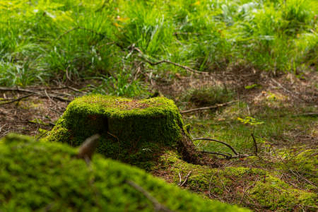 Tree stub covered in green, soft moss.