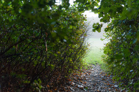 Small path throug bushes in a park. Looking out onto a misty field. Stock fotó
