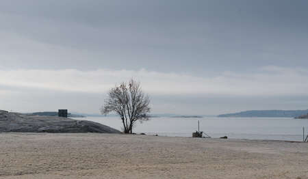 A tree in a small field by the sea at winter. 写真素材