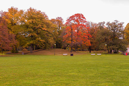 Autumn in a park. Green grass, brown, red and yellow trees behind park benches along a small path.