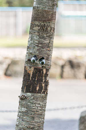 Googly eyes on an angry tree.