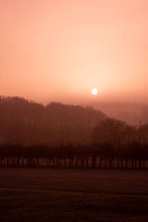 Brown and foggy sunrise over a park.
