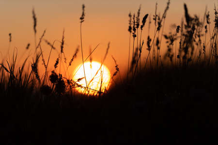 Silhouette of grass in front of a magnificent summer sunset 版權商用圖片