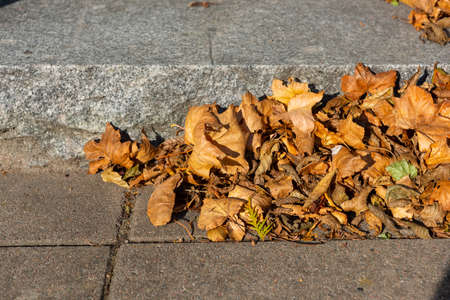 Dry brown leaves by stone stairs