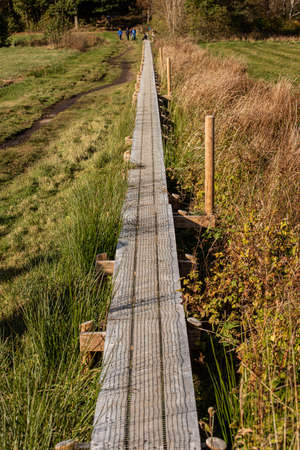 Walking path in a wet forest made safer with wooden planks