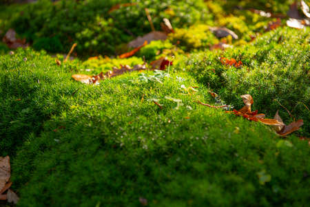 Green moss on rocks in the forest. 免版税图像