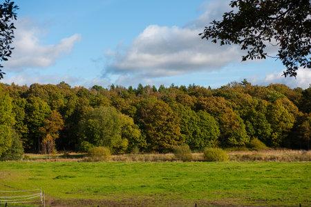 field by a autumn forest. 免版税图像