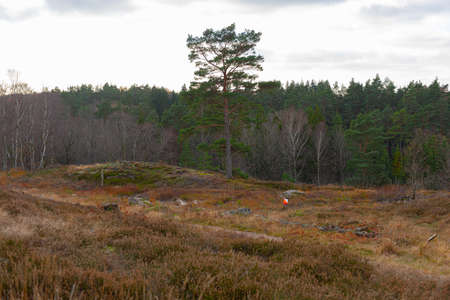 An orienteering control point in a clear. Stock Photo