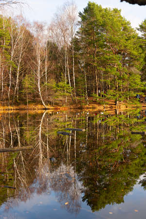 Reflections of a forest in a calm pond. 免版税图像