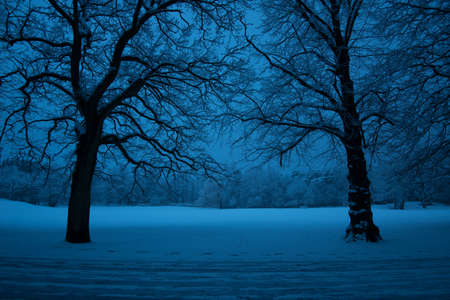 Silhouette of two naked trees in a snowy park. 免版税图像