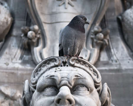 threatened: Pigeon sitting on a threatened sculpture