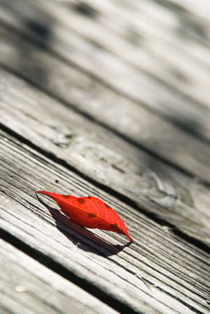 plum island: Single red birch leaf on a boardwalk Stock Photo
