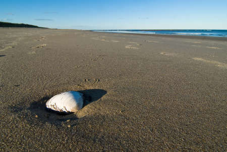 plum island: Wide angle photo of an isolated seashell on a sandy beach