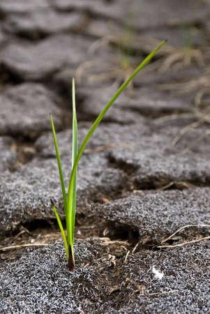 Life on harsh soil