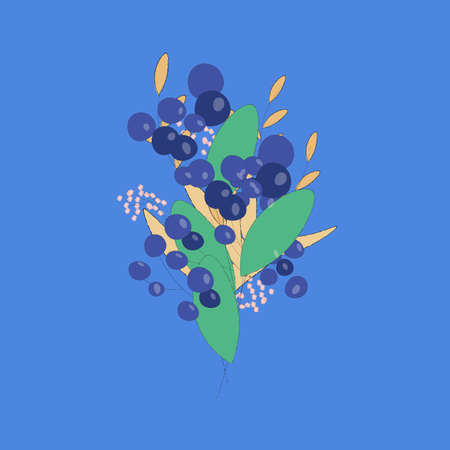 bunch of blueberries and wheat on blue background