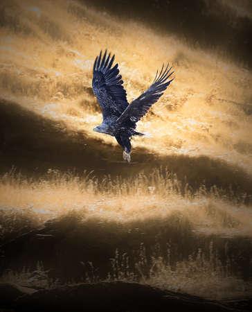 freiheit: Eine majestätische Seeadler im Flug.