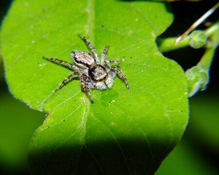 Spider Stock Photo - 13782813