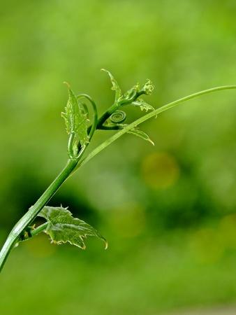 les plus: La plupart des plantes