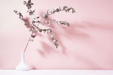 Dry eucalyptus branch in white ceramic vase in bright sunlight with shadow on pastel pink wall. Elegant home decor in simple calm wellness style. 免版税图像