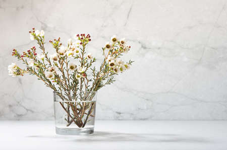 White tiny flowers on branch of bloom tree in glass in warm sun beam, modern interior with gray concrete wall, white wood table, copy space. Spring rural bouquet. 免版税图像
