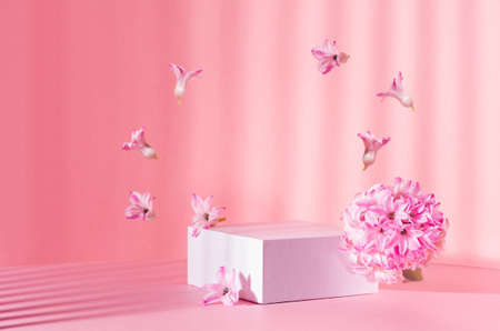 White square podium for display cosmetic, products in sunlight with spring flowers flying as arch and striped shadow in sunny day on pink background, copy space. 免版税图像