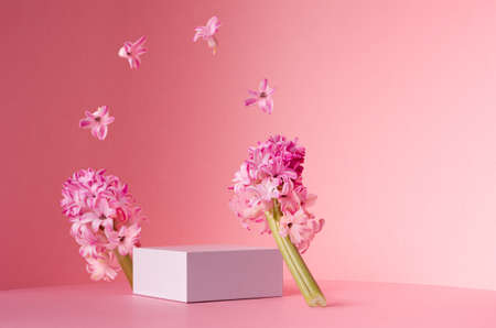 Romantic elegance white square podium with levitate spring hyacinth flowers as arch in sunlight on soft light pastel pink background, copy space.