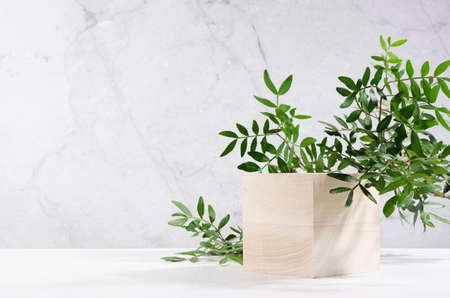 Elegant beige wooden cube podium with green lush foliage in sunlight on white board and gray marble wall for product display. Simple modern summer design. 免版税图像