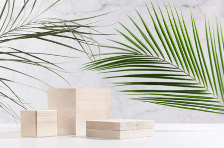 Natural style for cosmetics product display - wooden podiums with green palm leaf, shadow in sunlight on white wood table and gray marble wall.