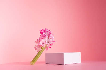 White square podium for display cosmetic and goods with fresh spring flowers standing on gentle pastel pink background, copy space, modern fashion style. 免版税图像