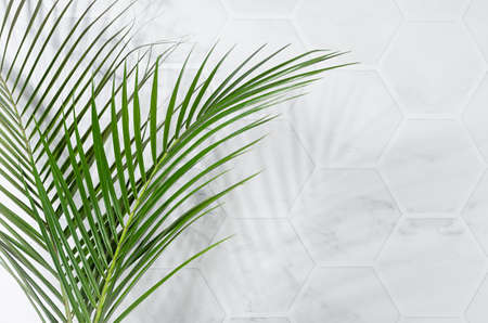 Fresh spring sunny green palm leaves in sunlight with shadow as border on white marble tile wall, copy space. 免版税图像