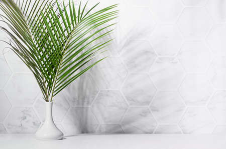 Fresh summer interior with green palm leaves in vase in sun light with shadow on white marble tile wall, wood table, copy space. 免版税图像 - 167321360