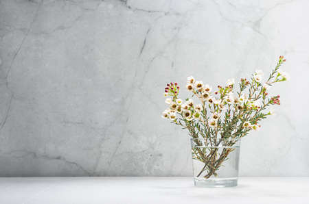 White cherry bloom branch in bright morning sun light as delicate spring home decor in modern grunge interior - marble wall, white wood table, copy space.