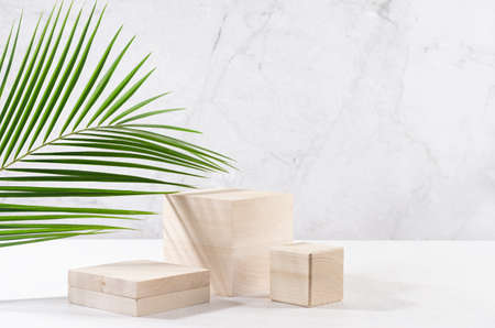 Wooden podiums with green palm leaf, shadow in elegant white interior with gray marble wall in sun light for cosmetics product display.