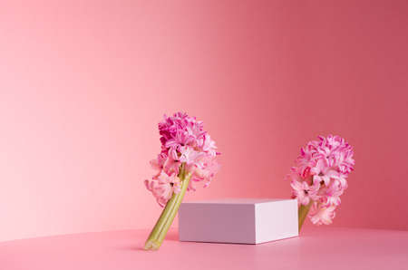 Delicate spring mock up for cosmetic and product display with white square podium, tender hyacinth flowers standing on pastel pink background. 免版税图像