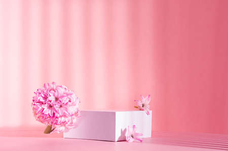 Elegant spring showcase with white square podium for display cosmetic and goods in sunlight, striped shadows with tender hyacinth flowers on pink background, copy space.