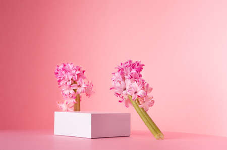 Romantic elegance white square podium with levitate spring hyacinth flowers in sunlight on soft light pastel pink background, copy space. Fashion fresh showcase.