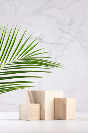 Summer style of showcase for cosmetics product display - wooden cube platforms with green palm leaf in sunlight on white wood board, gray plaster wall, vertical.