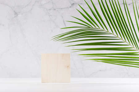 Wooden square podium with green palm leaf, shadow in elegant white interior with gray marble wall in sun light for cosmetics product display. 免版税图像