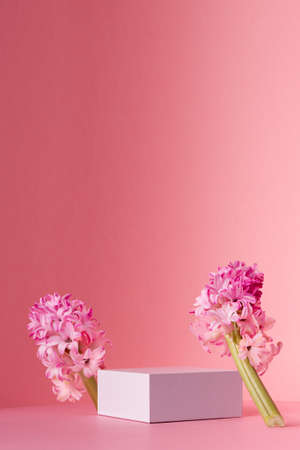 White square podium for display cosmetic, products with spring hyacinth flowers standing in sunlight on gradient pastel pink background, vertical.