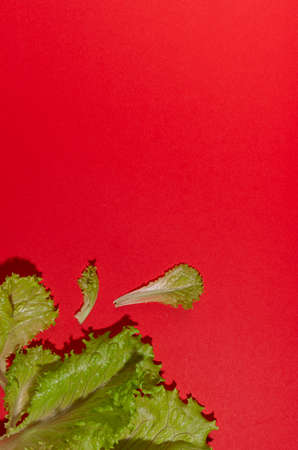 Bright green young salad leaves with shadow as border on red background, top view, vertical.